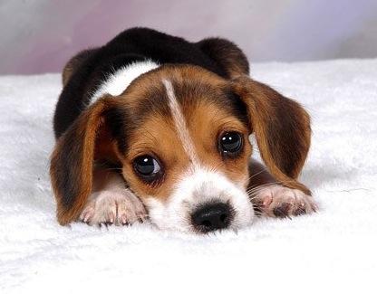 cute_puppy_photo_picture_11_168839