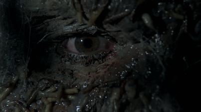 maggot eye