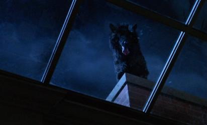 werewolf dog 3